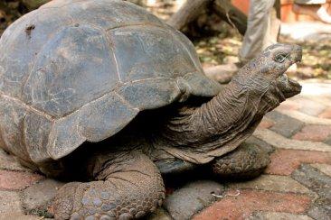 Individual tortoise